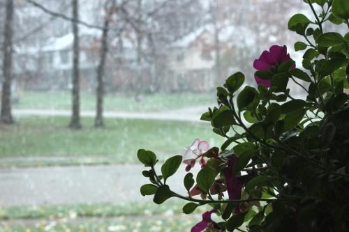 2012 Flower & Snow #2