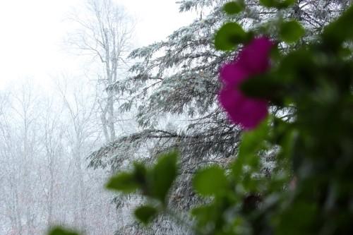 2012 Flower & Snow