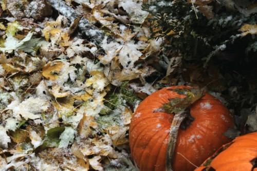 Pumpkin & Snow